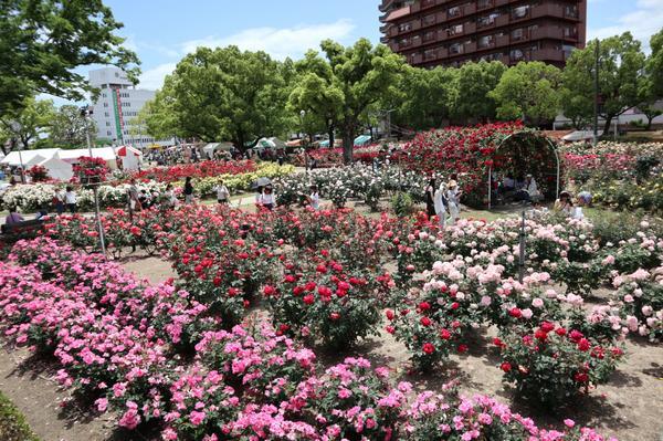 ばら公園 image