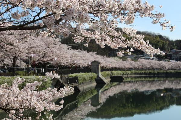 庄原上野公園 image