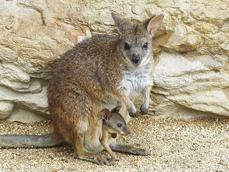 福山市立動物園 image