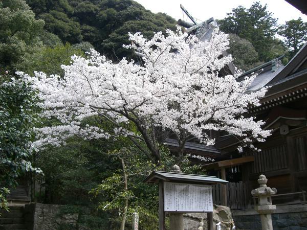 物部神社 image