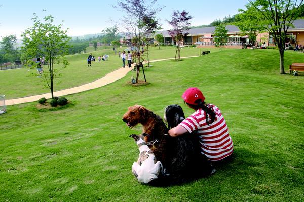 世界の名犬牧場 image