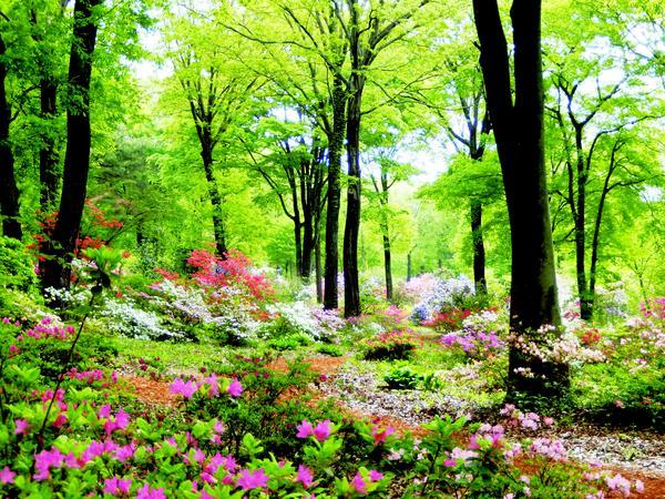 아카기 자연원 image