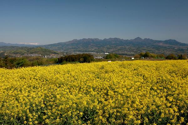 鼻高展望花の丘 image