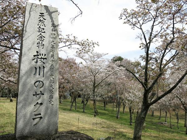 磯部桜川公園 image