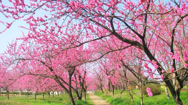 古河公方公园(古河综合公园) image