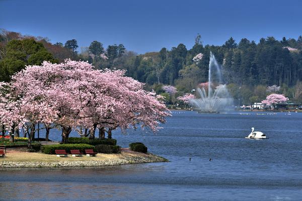 千波湖 image