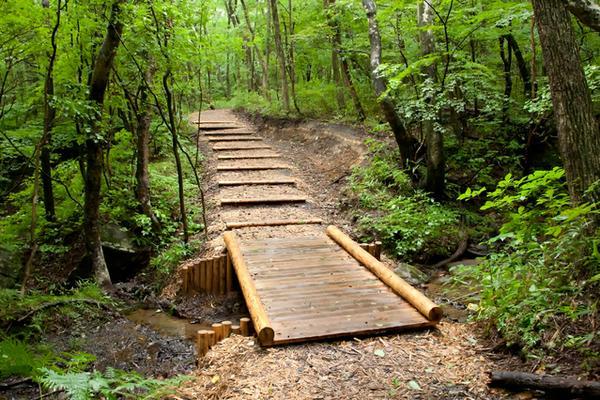 나스 헤이세이의 숲 image