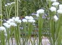 花摘み園チースの里 image