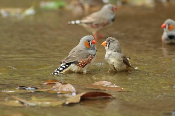 キャンベルタウン野鳥の森 image