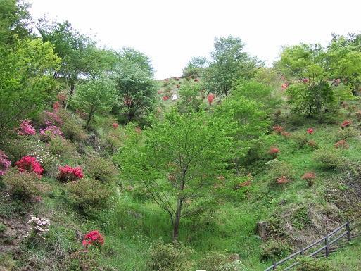 四季彩の丘公園 image