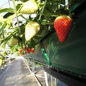 苺の里 西戸店 image