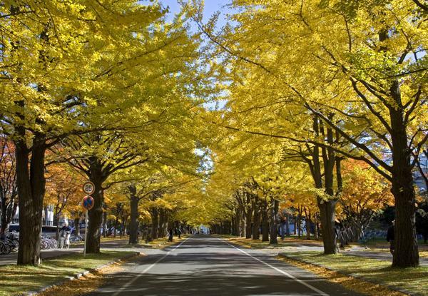 北海道大学 image