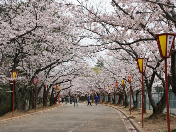 日岡山公園 image