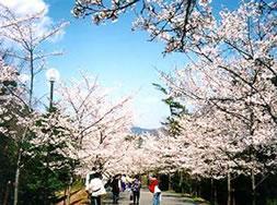 兵庫県立播磨中央公園 image