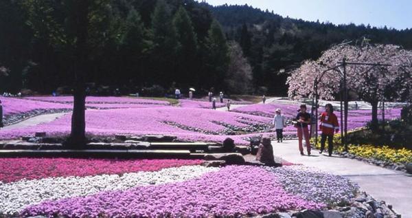 花のじゅうたん image