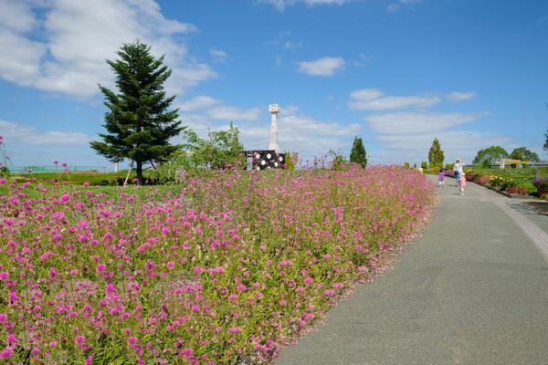 ひまわりの丘公園 image