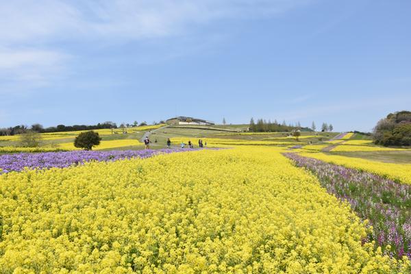 兵庫県立公園あわじ花さじき image