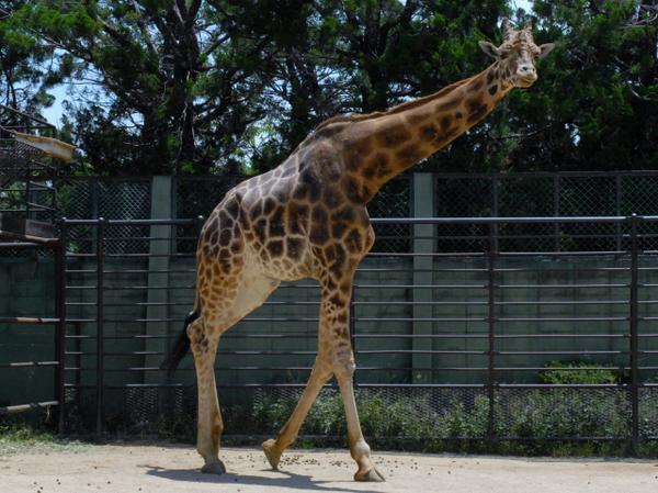 姫路市立動物園 image