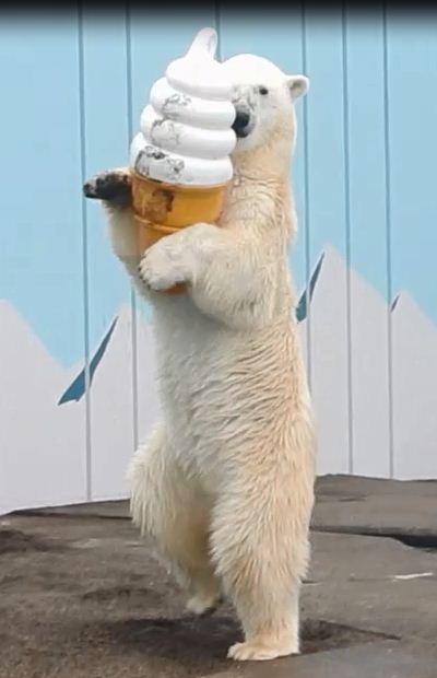 釧路市動物園 image