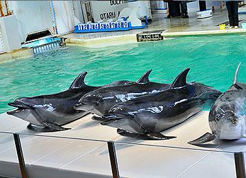 おたる水族館 image