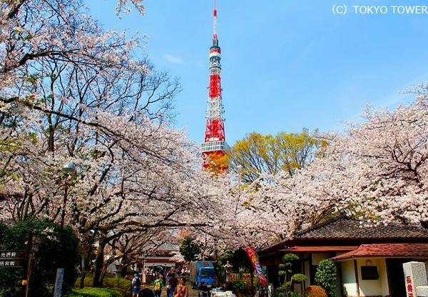 Tokyo Tower image3