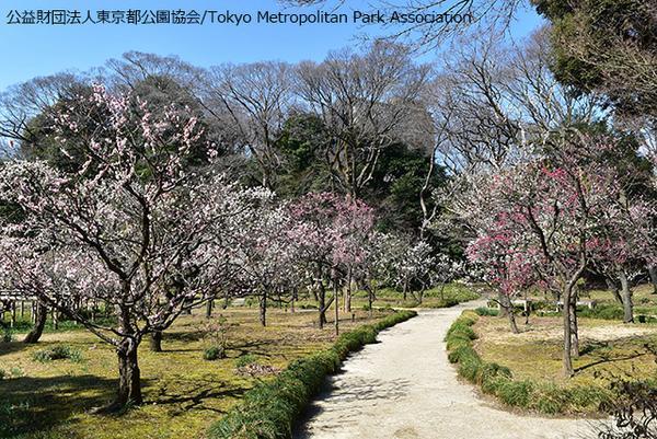 สวนโคอิชิคาวะโคราคุเอ็ง image