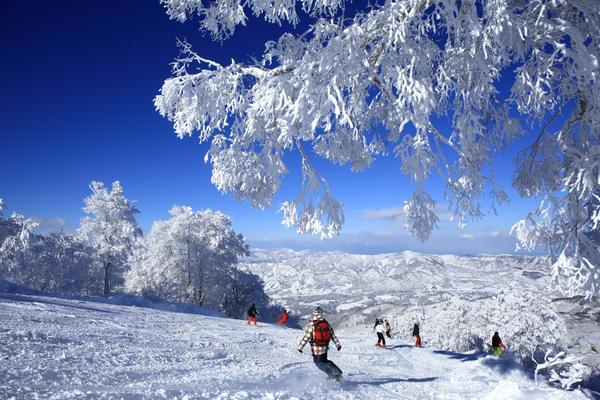 노자와 온천 스키장 image