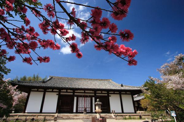 新藥師寺 image