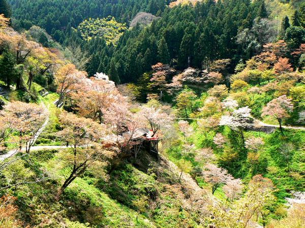 吉野山 image
