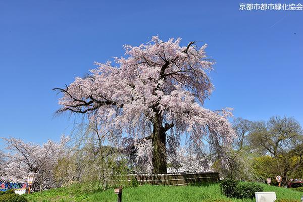마루야마 공원 image