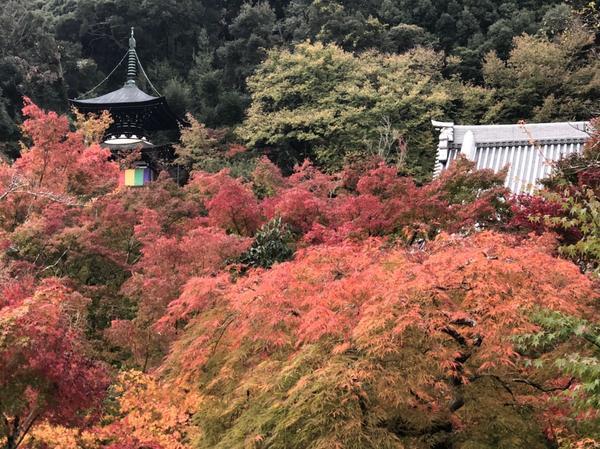 禅林寺(永观堂) image
