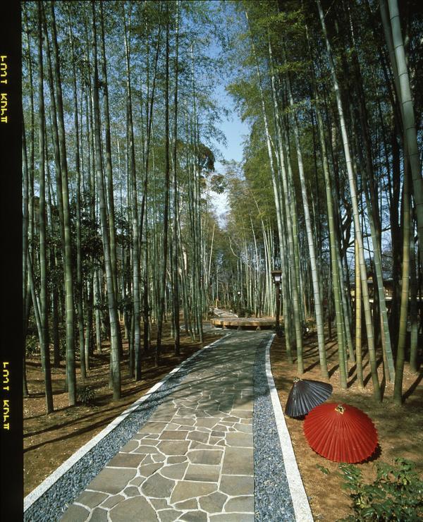 竹林の小径 image