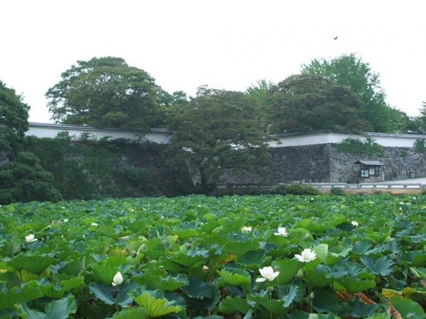 舞鹤公园 image
