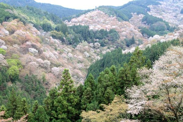吉野熊野国立公園 image