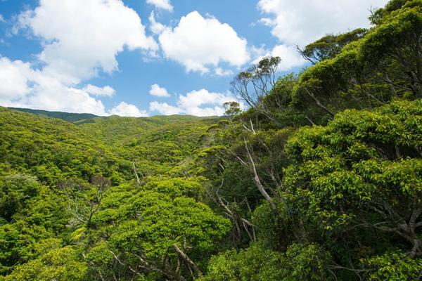 山原國立公園 image