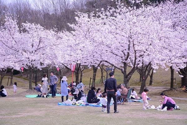 因幡千本桜 桜の園 image