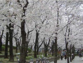 隅田公園 image