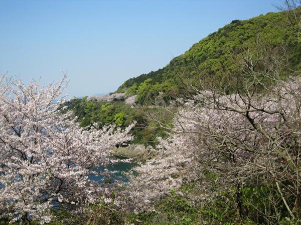 유노코 체리라인 image