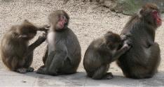 高崎山自然動物園 image