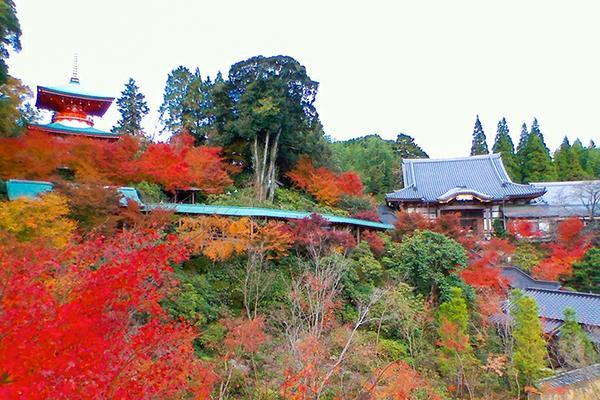 普明山 高野寺 image