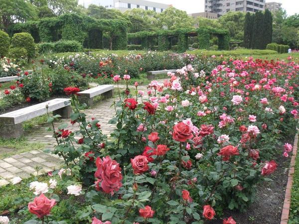 徳島中央公園 image
