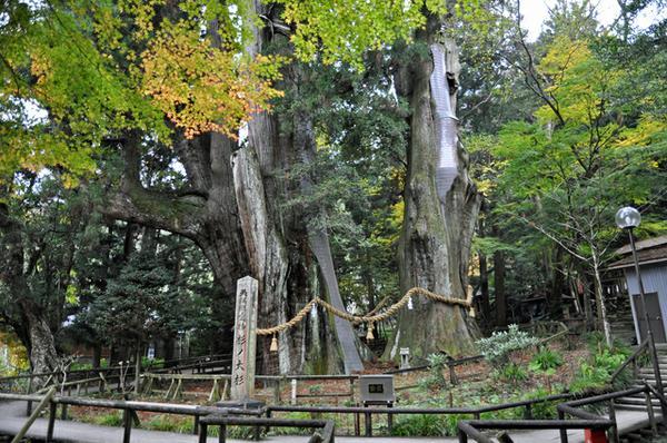 杉の大スギ image