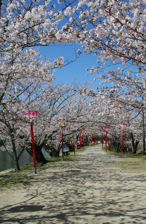 小城公園 image