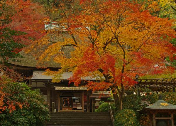 大興善寺 image