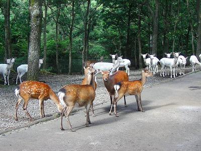 くじゅう自然動物園 image
