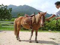 ガンジー牧場 image