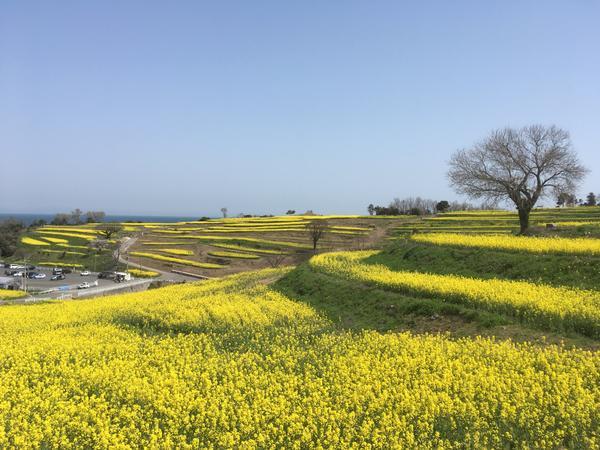 長崎鼻リゾートキャンプ場 image
