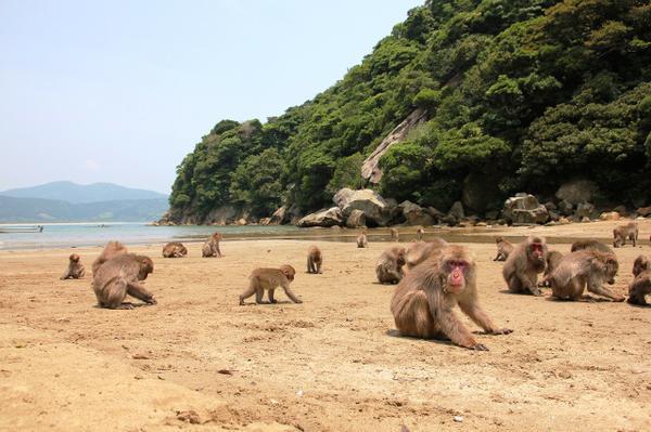 幸島 image