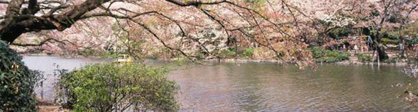 井の頭恩賜公園 image