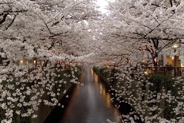 Meguro River image